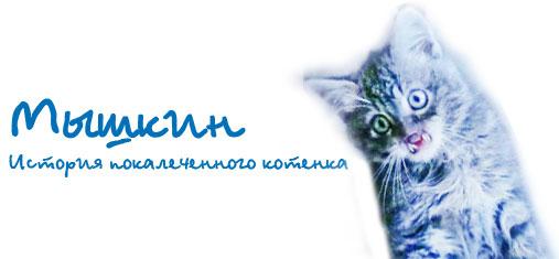 МЫШКИН. История покалеченного котенка